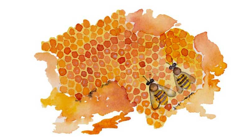 Watercolor painting of a honeycomb with bees.