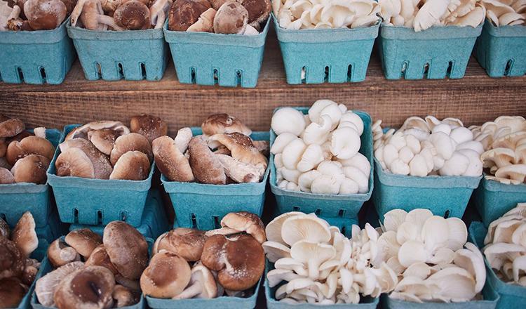 Hudson Valley Farmer's Market mushrooms