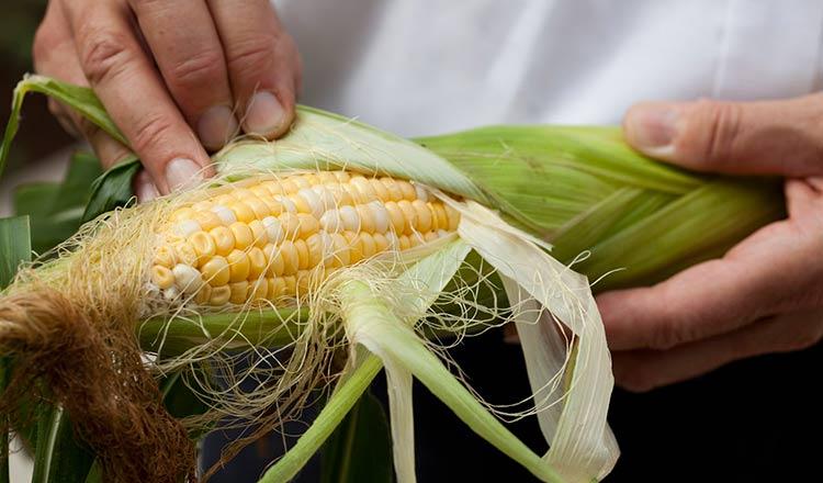 Peeling corn on the cob