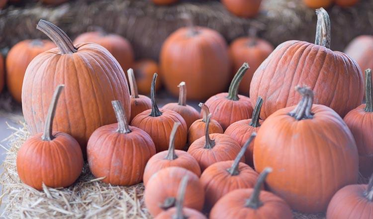 Pumpkins at the farmers' market